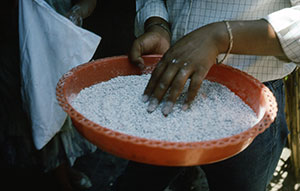 Making Cochineal